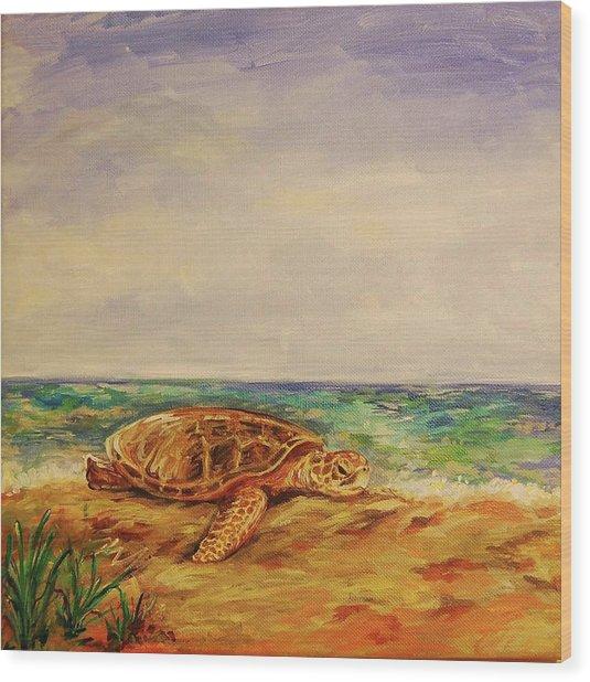 Resting Sea Turtle Wood Print by Danielle Hacker