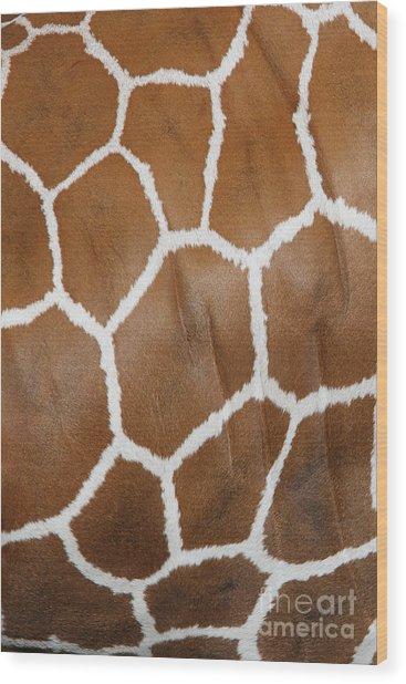 Reticulated Giraffe #2 Wood Print