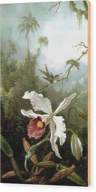 Retouched Masters - Orchid And Hummingbirds In Tropical Forest Wood Print