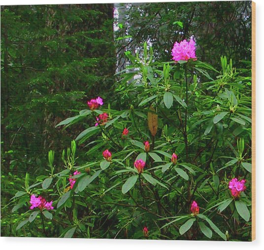 Rhodies In The Redwoods Wood Print by Tom Kidd