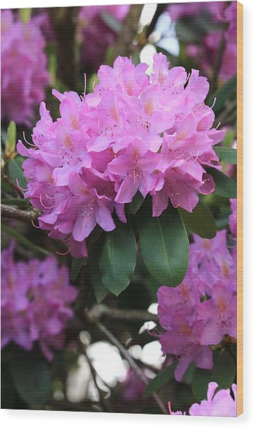 Rhododendron Beauty Wood Print