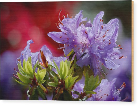 Rhododendron Bluebird Wood Print
