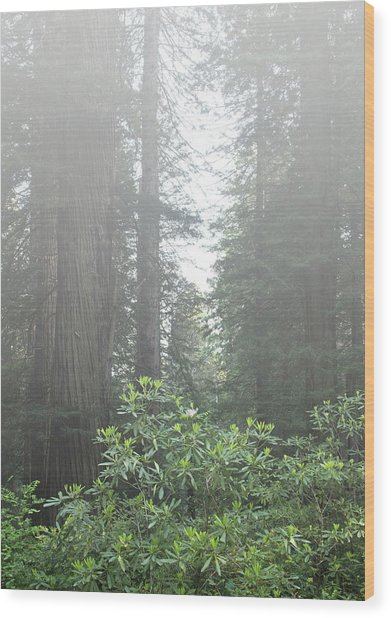 Rhododendrons In The Fog Wood Print