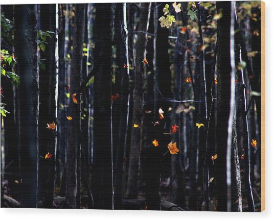 Rhythm Of Leaves Falling Wood Print