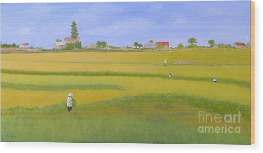Rice Field In Northern Vietnam Wood Print by Thi Nguyen