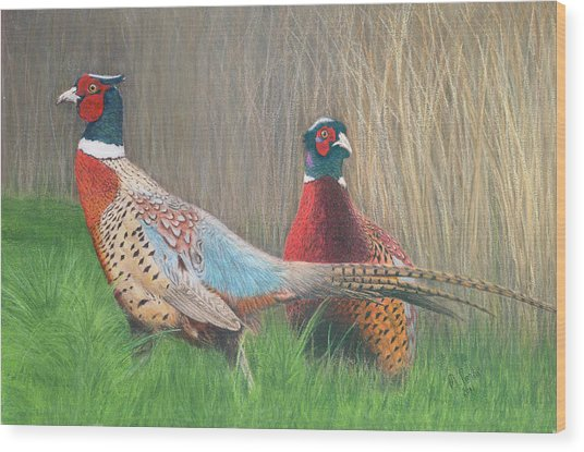 Ring-necked Pheasants Wood Print by Marlene Piccolin