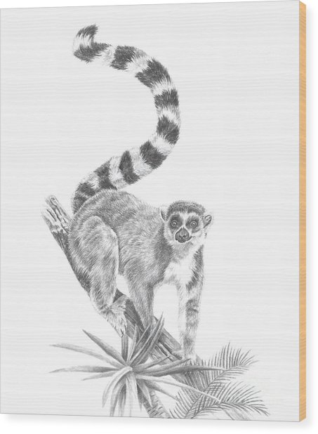 Ring-tailed Lemur Wood Print
