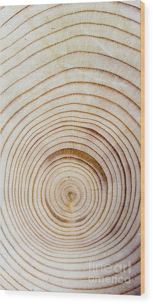 Rings Of A Tree Wood Print