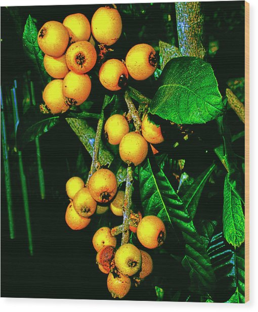 Ripe Loquats Wood Print