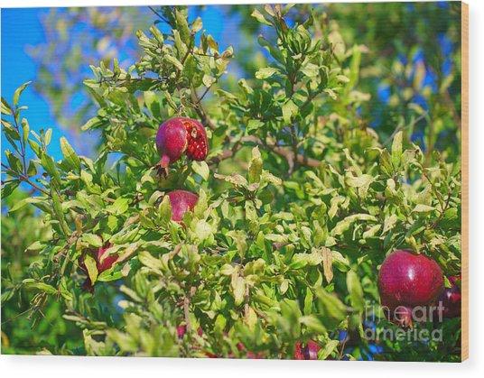 Ripe Pomegranate On The Tree In Jerusalem During Sukkoth Wood Print
