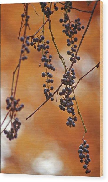 Ripe Wild Grapes  Wood Print