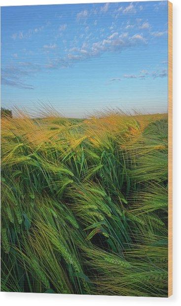Ripening Barley Wood Print