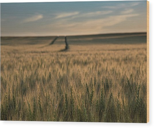 Ripening Wheat No. 1 Wood Print by Al White
