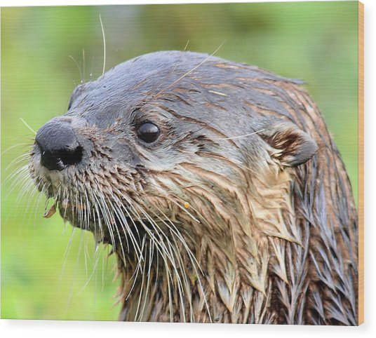 River Otter Wood Print