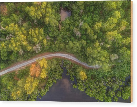 Wood Print featuring the photograph Road Inside Jungle From Above by Pradeep Raja PRINTS