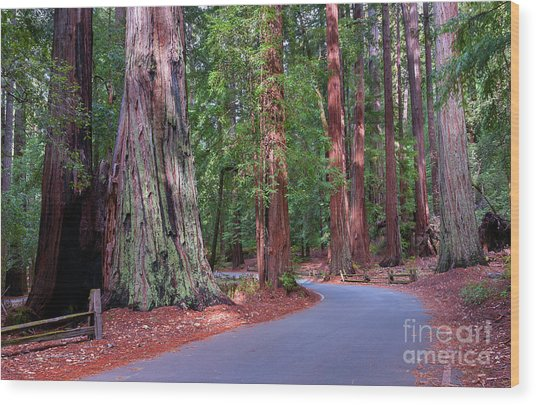 Road Through Redwood Grove Wood Print
