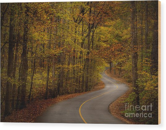 Wood Print featuring the photograph Road Through Tishomingo State Park by T Lowry Wilson