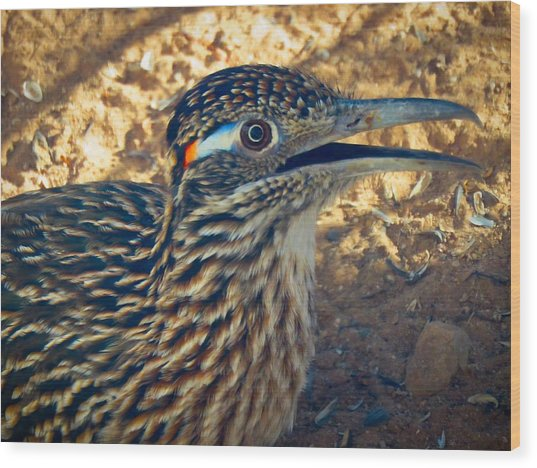 Roadrunner Portrait Wood Print