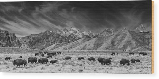 Roaming Bison In Black And White Wood Print