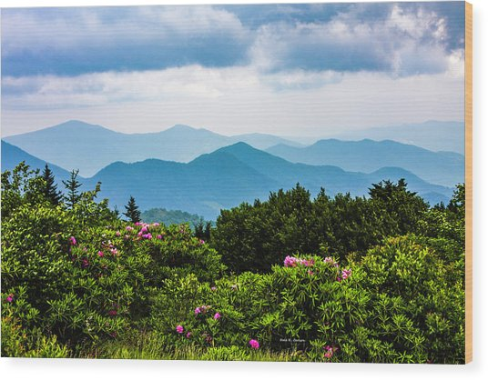 Roan Mountain Rhodos Wood Print