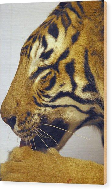 Roar Wood Print by Jez C Self