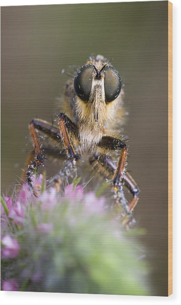 Robberfly Wood Print by Andre Goncalves