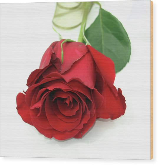 Roberts Single Red Rose Wood Print