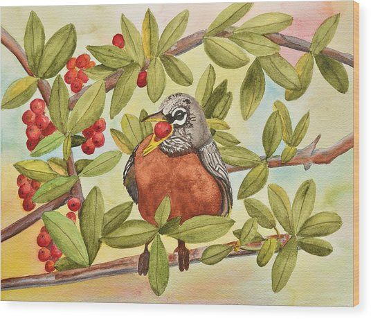 Robin Eating Berries Wood Print