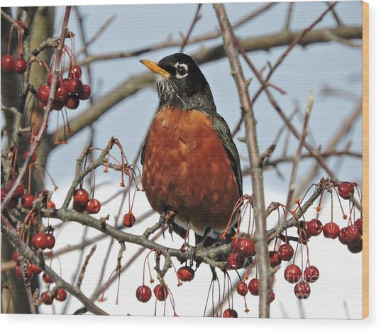 Robin In Winter Wood Print