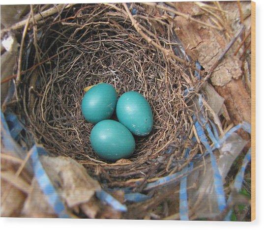 Robin Nest Wood Print by Melissa Parks