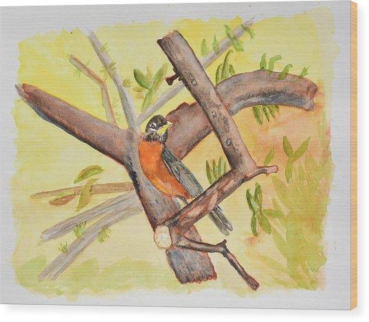 Robin On Tree Branch Wood Print