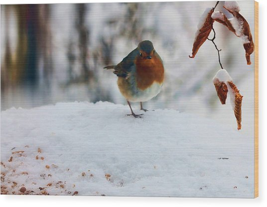 Wood Print featuring the photograph Robin Redbreast by Valerie Anne Kelly