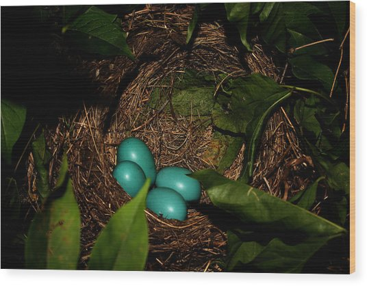 Robins Nest Wood Print