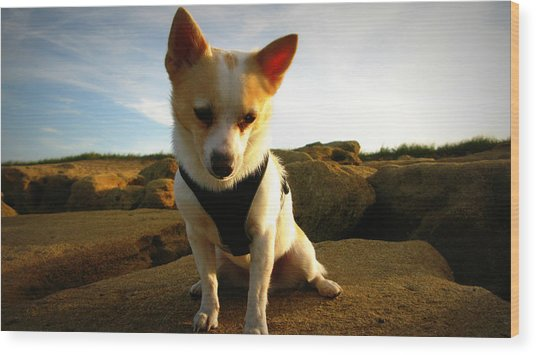 Rock Climbing Rocko Wood Print by Mandy Shupp