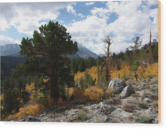 Rock Creek Shrub Aspens Eastern Sierra Wood Print