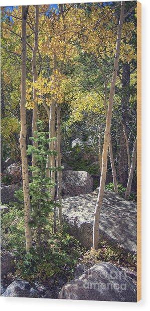 Rock Garden 2 Wood Print