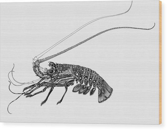 Rock Lobster Wood Print