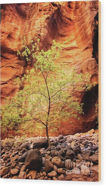 Rock Tree Wood Print