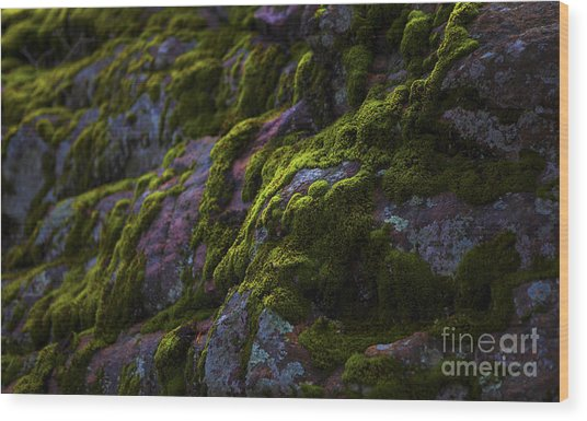Rock With Green  Wood Print by Barbara Schultheis