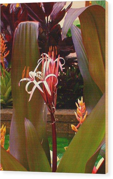 Rockefeller Fleur In Nyc Wood Print