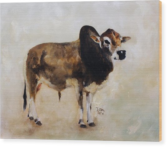 Rocket The Master Champion Herd Sire Miniature Zebu Wood Print