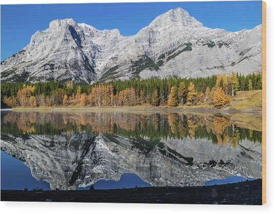 Rockies From Wedge Pond Under Late Fall Colours, Spray Valley Pr Wood Print