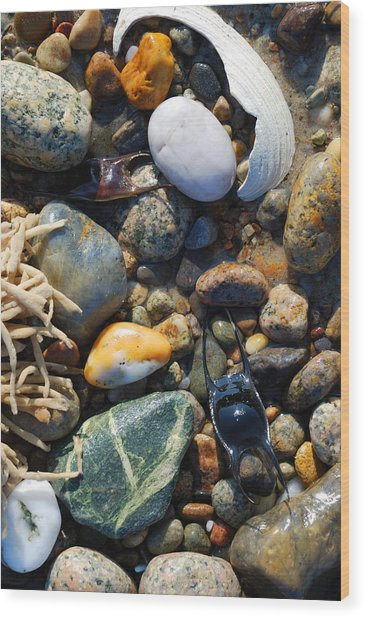 Rocks And Shells On Sandy Neck Beach Wood Print