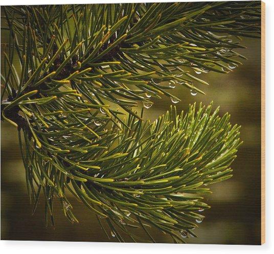Rocky Mountain Rain Wood Print by Patrick  Flynn
