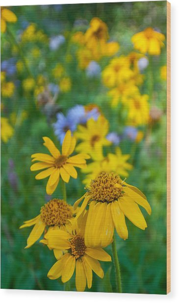 Rocky Mountain Wildflowers Wood Print