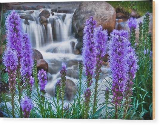 Rocky Mountain Wildflowers Wood Print