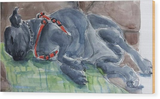 Rocky Napping Wood Print by Janet Butler