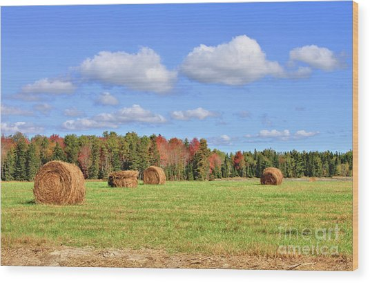 Rolls Of Hay On A Beautiful Day Wood Print