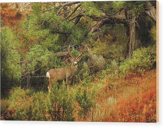 Roosevelt Deer Wood Print