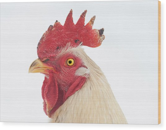 Rooster Named Spot Wood Print